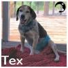 Tex *