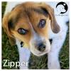 Zipper *