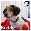 Buddy *