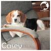 Casey *