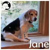 Jane *