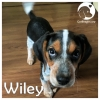 Wiley *
