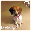 Melody *