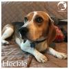 Heckle *