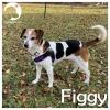 Figgy