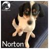 Norton *