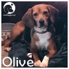 Olive *