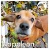 Napoleon *