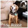 Eddie Rabbit