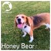 Honey Bear *