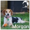Morgan *