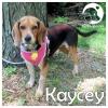 Kaycey *