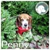 Penny *