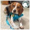 Ruby Dee *