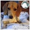 Maddie *