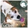 Tucker *