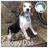 Snoopy Doo *