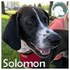 Solomon *