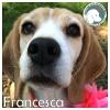 Francesca *