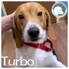 Turbo *