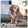 Chika
