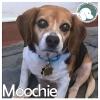 Moochie *