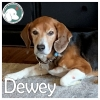 Dewey *