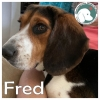 Fred *