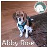 Abby Rose *