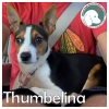 Thumbelina *