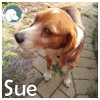 Sue *