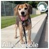 Allie Nicole *