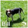 Bill *