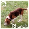 Rhonda *
