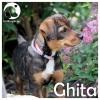 Ghita *