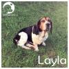 Layla *