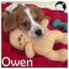 Owen *