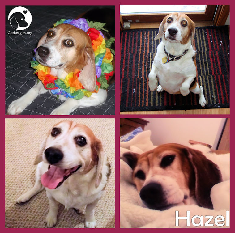 hazel collage