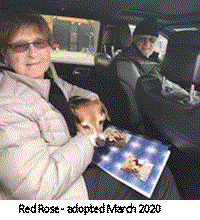 red rose adopted aarb